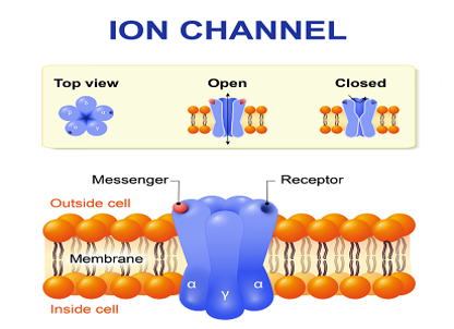 Preclinical CRO: What is ION Channel Screening?